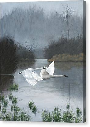 Pair Of Swans Canvas Print