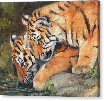 Pair Of Tiger Cubs Canvas Print by David Stribbling