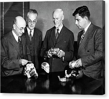 Palaeontologists Examining Skulls Canvas Print