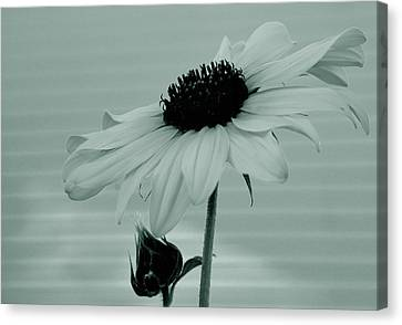 Pale Beauty Canvas Print by Steven Milner