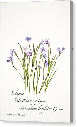 Pale Blue-eyed Grass Canvas Print