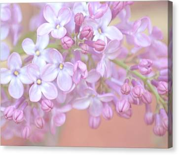 Pale Lilac Canvas Print by Sharon Lisa Clarke