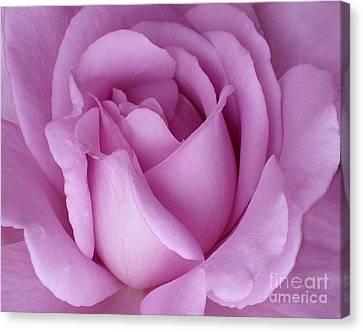 Pale Magenta Rose Canvas Print