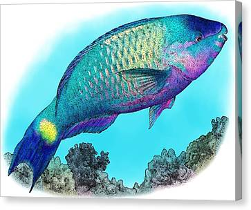Palenose Parrotfish Canvas Print by Roger Hall