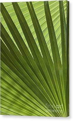Palm Abstract Canvas Print by Patty Colabuono