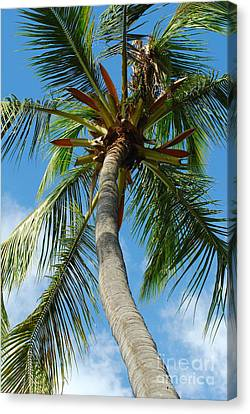 Palm And Sky Canvas Print by Kathy Gibbons