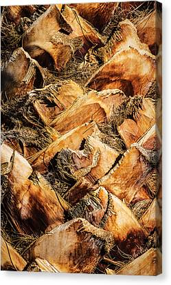 Palm Bark Canvas Print