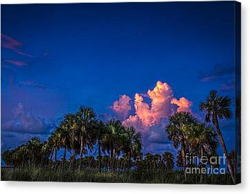 Palm Clouds Canvas Print