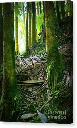 Canvas Print featuring the photograph Palm Forest by Ellen Cotton