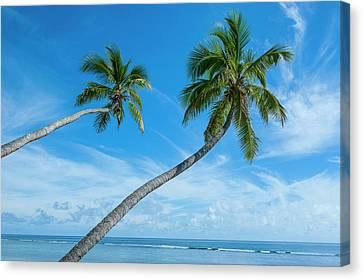 Palm Fringed Kolovai Beach, Tongatapu Canvas Print by Michael Runkel