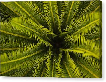 Palm Fronds Canvas Print by Amber Kresge