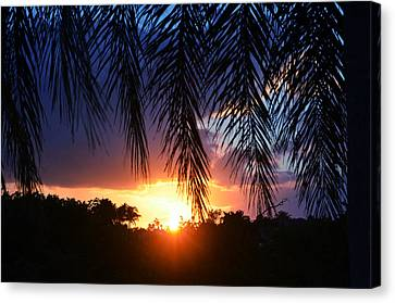Palm Horizon Canvas Print