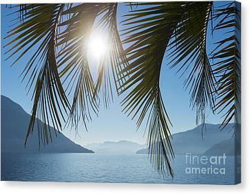 Palm Leaf Canvas Print by Mats Silvan