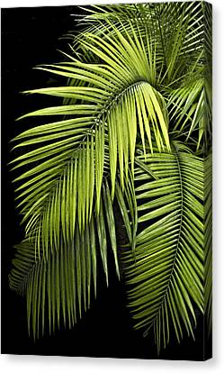 Palm Leaves Canvas Print by Judy  Johnson