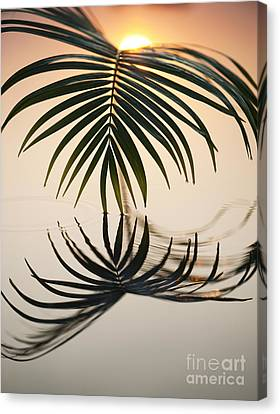 Palm Light Canvas Print by Tim Gainey