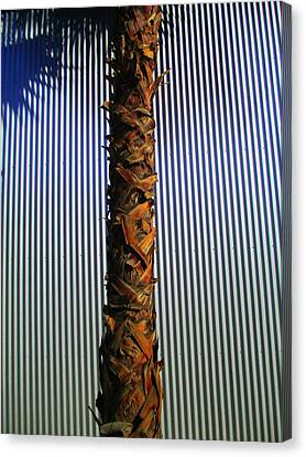 Palm On Sheet Metal Canvas Print by Randall Weidner