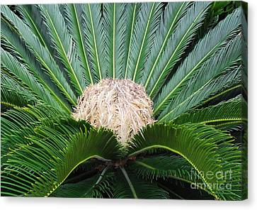 Canvas Print featuring the photograph Palm Plant by Val Miller