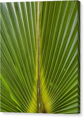 Palm Reader Canvas Print by Sean Allen