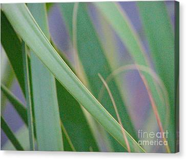 Canvas Print featuring the photograph Palm Reeds by Val Miller