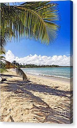 Palm Shadow Canvas Print by George Oze