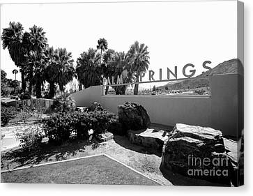 Palm Spring  Canvas Print by Art K