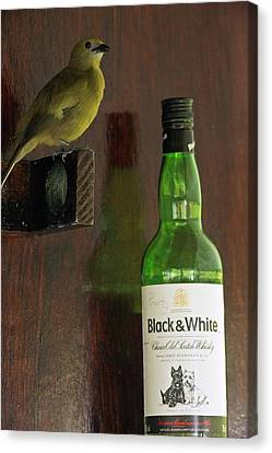 Palm Tanager And Whisky Bottle Canvas Print