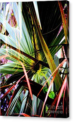 Palm Through The Fronds Canvas Print