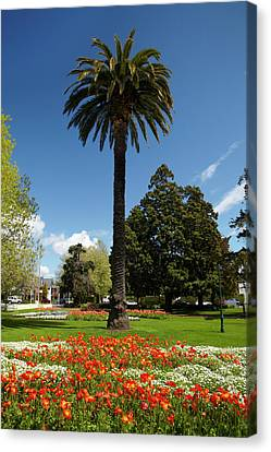 Palm Tree And Flower Gardens, Seymour Canvas Print by David Wall