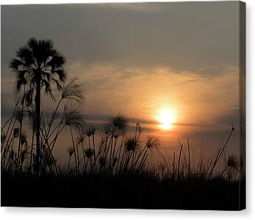 Palm Tree And Papyrus Plants At Dusk Canvas Print by Panoramic Images