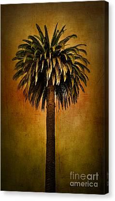 Palm Tree Canvas Print by Elena Nosyreva