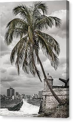 Palm Tree In Havana Bay Canvas Print