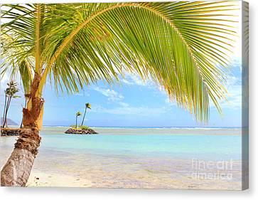 Canvas Print - Palm Tree by Kristine Merc