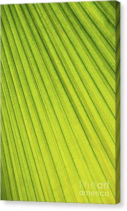 Palm Tree Leaf Abstract Canvas Print by Elena Elisseeva