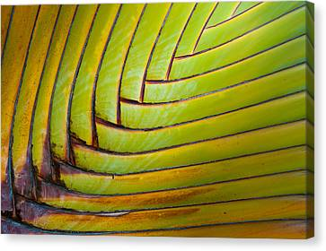 Palm Tree Leafs Canvas Print by Sebastian Musial