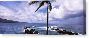 Palm Tree On The Coast, Honolulu Nui Canvas Print