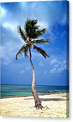 Palm Tree Swayed Canvas Print by Kristina Deane