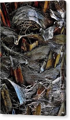 Palm Tree Trunk - Darwin - Australia Canvas Print