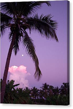 Palm Tree With Moon Canvas Print by Marianne Miles