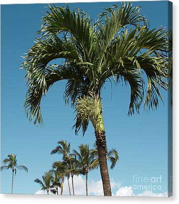 Palm Trees And Blue Sky Canvas Print by Sharon Mau