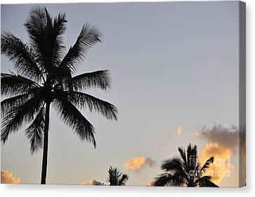Palm Trees At Sunrise Canvas Print by Sami Sarkis