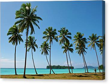 Michael Canvas Print - Palm Trees In Port Orly, Espiritu Santo by Michael Runkel