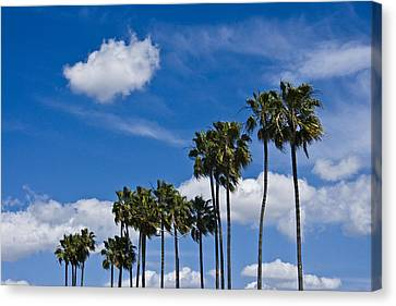 Palm Trees In San Diego California No. 1661 Canvas Print by Randall Nyhof
