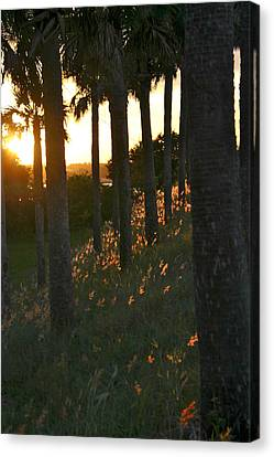 Palm Trees In Silhouette Canvas Print