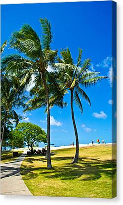 Palm Trees In The Park Canvas Print by Matt Radcliffe