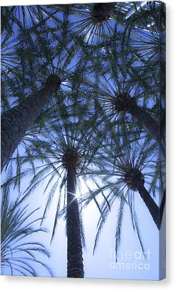 Canvas Print featuring the photograph Palm Trees In The Sun by Jerry Cowart