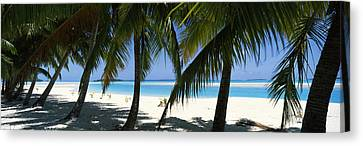 Palm Trees On The Beach, Aitutaki, Cook Canvas Print by Panoramic Images