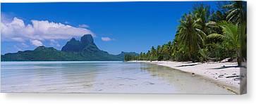 Palm Trees On The Beach, Bora Bora Canvas Print