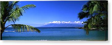 Palm Trees On The Beach, Kapalua Beach Canvas Print by Panoramic Images