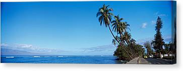 Urban Scenes Canvas Print - Palm Trees On The Coast, Lahaina, Maui by Panoramic Images