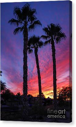Palm Trees Sunset Canvas Print by Robert Bales